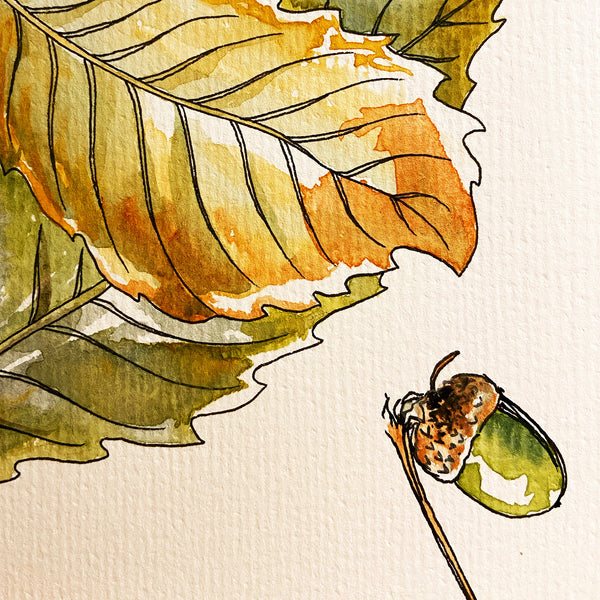 autumn leaf and acorn painted in watercolour and ink