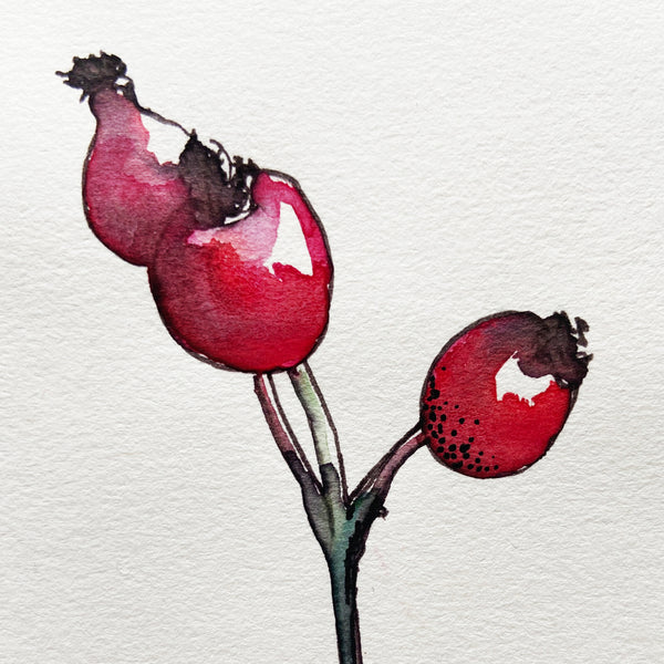 Rosehips painted with watercolour and ink.