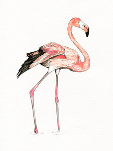Flamingo giclée print with handpainted watercolour plumage.