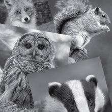 Load image into Gallery viewer, Art set forest reference photographs:  owl fox squirrel badger.