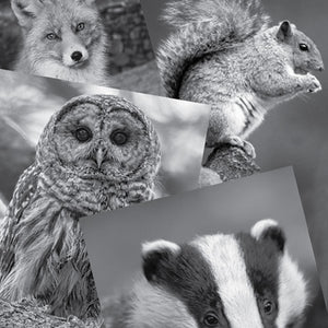 Art set forest reference photographs:  owl fox squirrel badger.