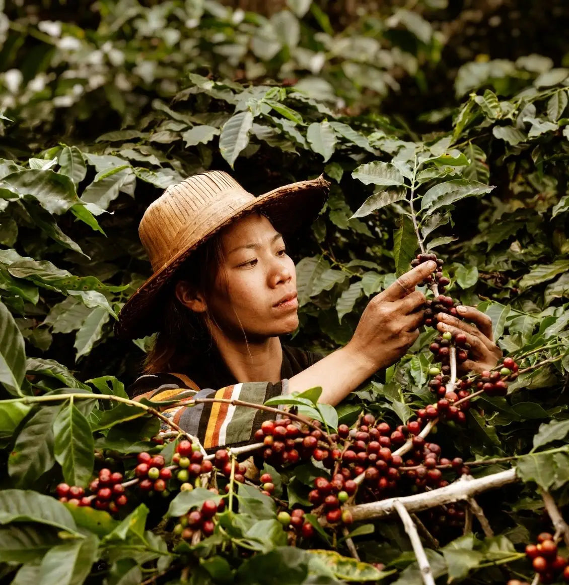 All of New Kings Coffee is sustainable, fairtrade and organic