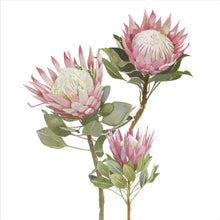 Load image into Gallery viewer, Protea Print