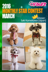 Model Dog Creative Grooming Contest