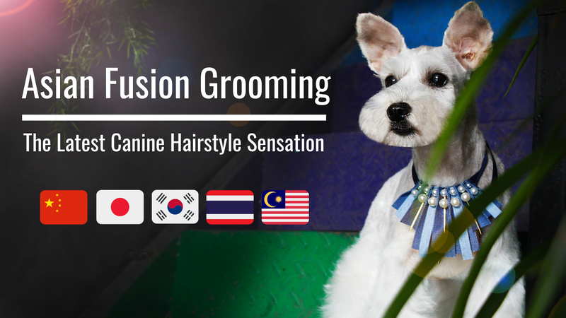 Asian fusion dog grooming