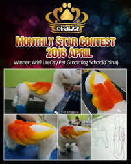 April Monthly Star – Congratulations!