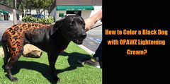 How to Color a Black Dog with OPAWZ Lightening Cream