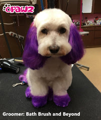 Dog Hair Dye-Mystic Purple (PD06)