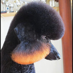 Pet Hair Chalk-Orange (TC03)