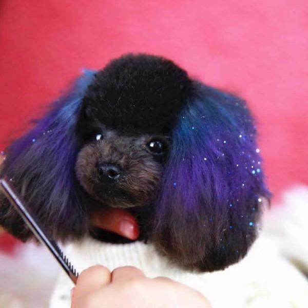 Pet Hair Chalk-Purple (TC04)