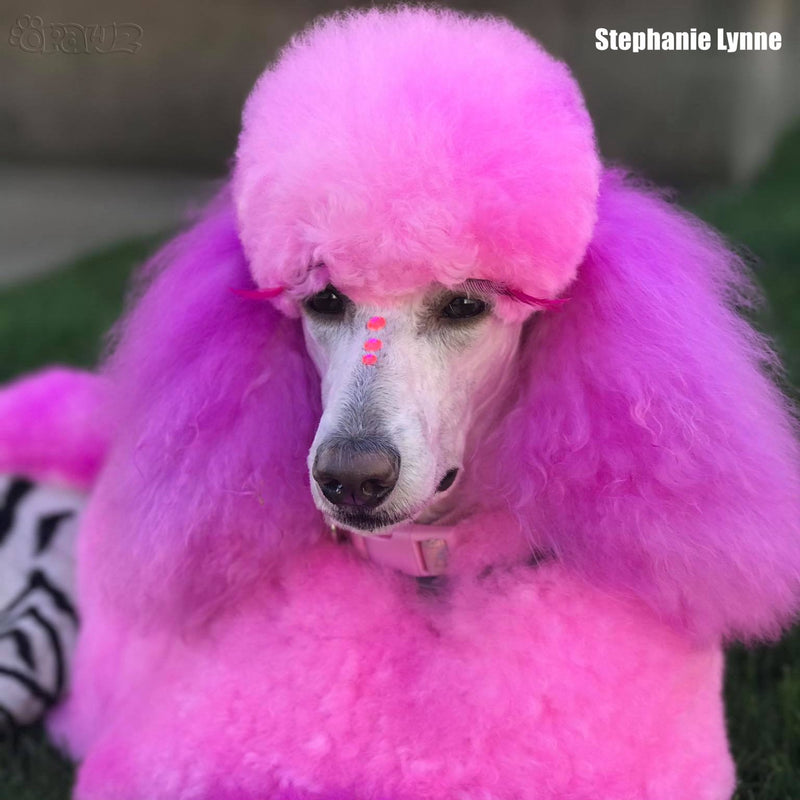 Dog Hair Dye-Charm Pink (PD17)