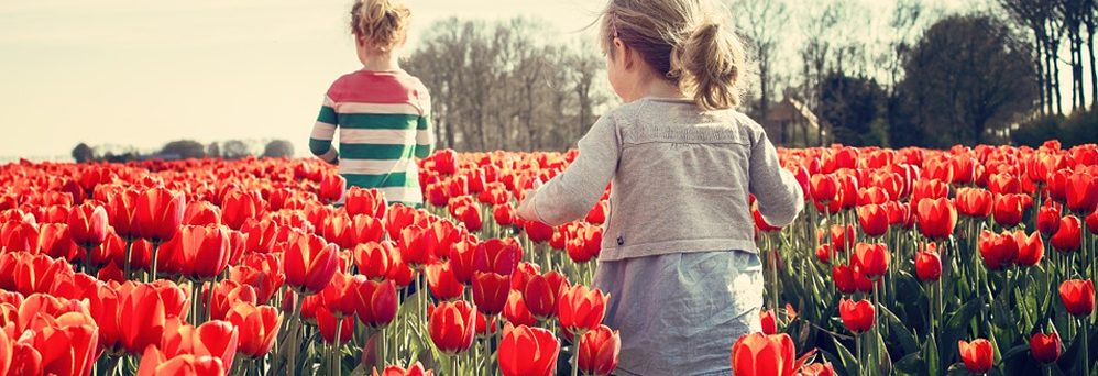 kids playing in a field of red flowers