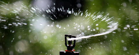 sprinkler head spraying water