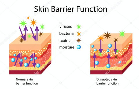 Skin barrier function, normal and disrupted, vector illustration isolated — Vector by bemoll