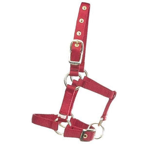 Miniature Horse Halter - FG Pro Shop Inc.