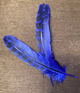 Dyed Pheasant Feathers