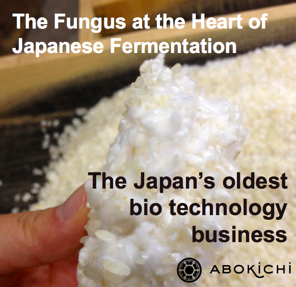 The Fungus at the Heart of Japanese Fermentation, and Cuisine - Koji-kin
