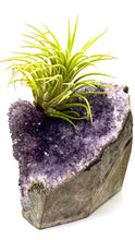 Load image into Gallery viewer, Amethyst and Tillandsia