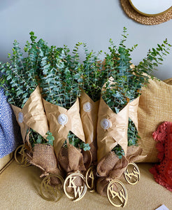Eucalyptus Shower Bundles