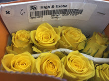 Load image into Gallery viewer, Wholesale Roses Varieties