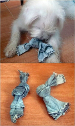 10 Easy Diy Toys For Your Dog Image 1