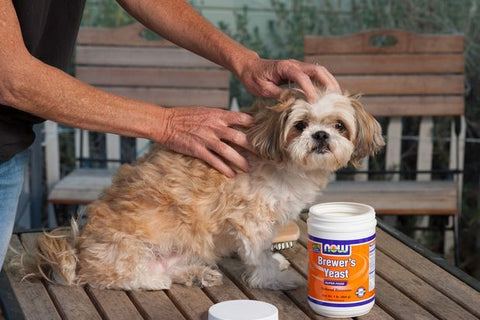 2021 Best Guide On Dog Flea Treatment Image 7