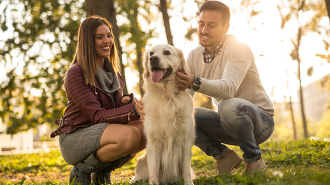 5 Smart Tips To Be A Better Pet Parent Image 1