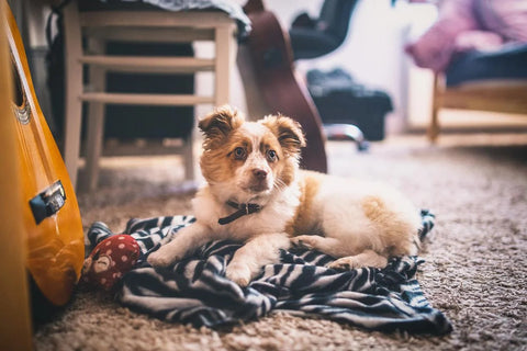 5 Smart Tips To Be A Better Pet Parent Image 3