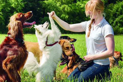 5 Smart Tips To Be A Better Pet Parent Image 5