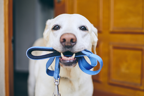 5 Tips To Train Your Dog To Be Home Alone Image 2