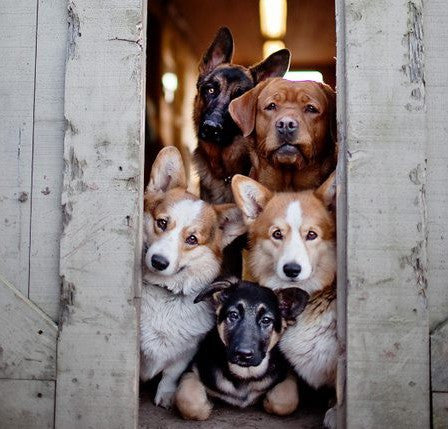 5 Tips To Train Your Dog To Be Home Alone Image 4