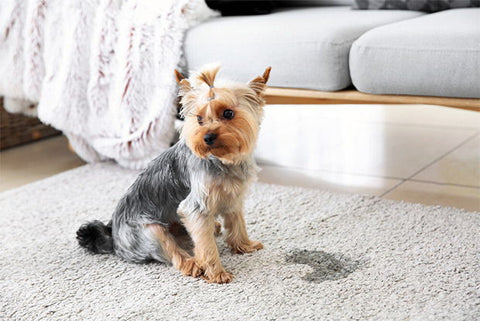 How To Clean Dog Pee From Carpet Image 1