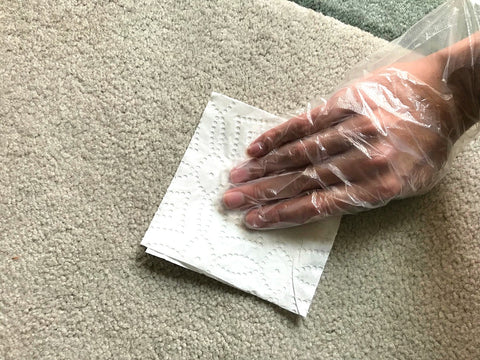 How To Clean Dog Pee From Carpet Image 2