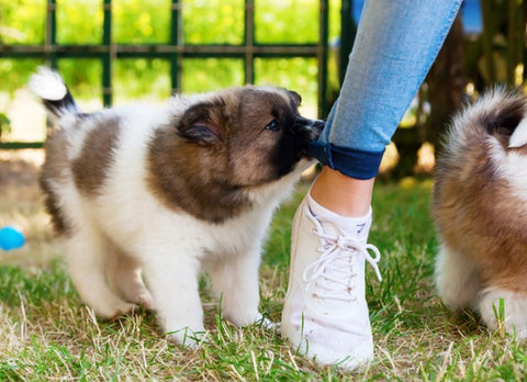 How To Teach Your Puppy Not To Bite Image 2