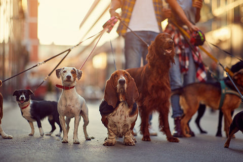 Leash Train Your Puppy – All You Need to Know In 2021 Image 1