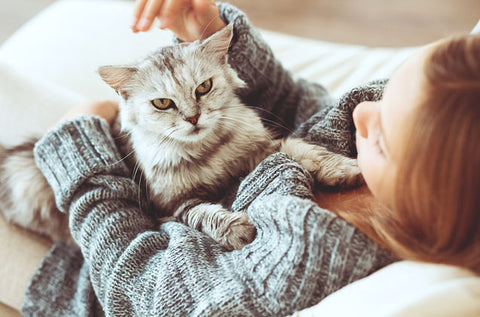 The Best Way To Pet A Cat Image 1