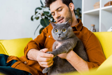 The Best Way To Pet A Cat Image 2