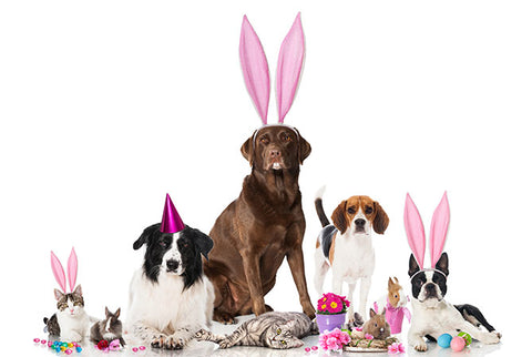 Tips To Have A Fun And Safe Easter With Your Pet Image 3