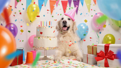 Top 5 Easy Dog Birthday Cake Recipes in 2021 Image 1