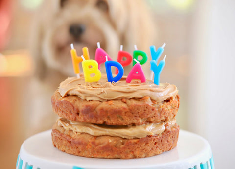 Top 5 Easy Dog Birthday Cake Recipes in 2021 Image 3