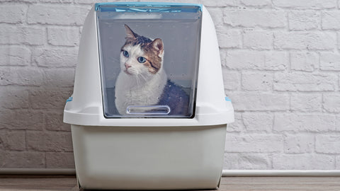 Top 5 Tips For New Cat Owners Image 3