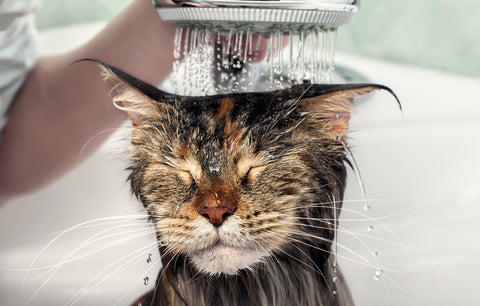 Top 5 Tips For New Cat Owners Image 4