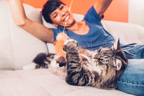 Top 5 Tips For New Cat Owners Image 5