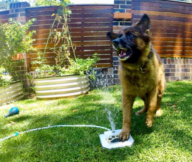 Automatic Dog Water Fountain