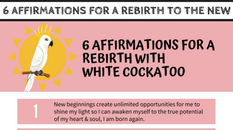 """6 Affirmations for Rebirth with White Cockatoo"" Guide with Mirree PDF"