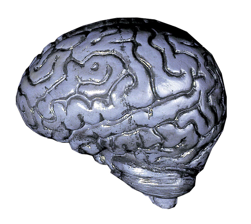 Distortions Unlimited Gruesome Realistic Human Brain Decoration - Costume Arena