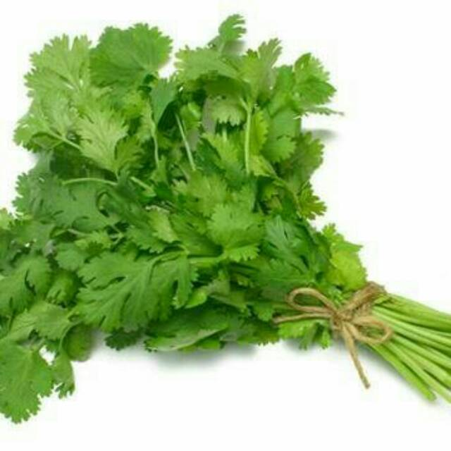 DAUN KETUMBAR PARSLEY CORIANDA LEAVES