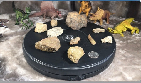 GRAB BAG / Authentic Fossils : Cretaceous Pieces & Parts