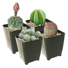 Load image into Gallery viewer, Succulents Box
