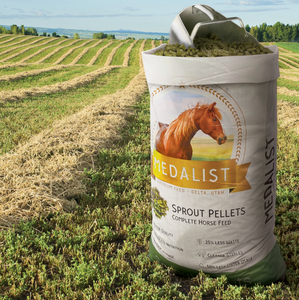 Bag of pellets inn field: Sprout pellet bag with a horse feed scoop in a field of alfalfa. Complete nutrition: Our high quality sprout blend helps bring all of the nutrition your horse needs.